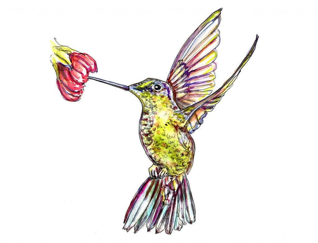 Hummingbird Wings Watercolor Illustration