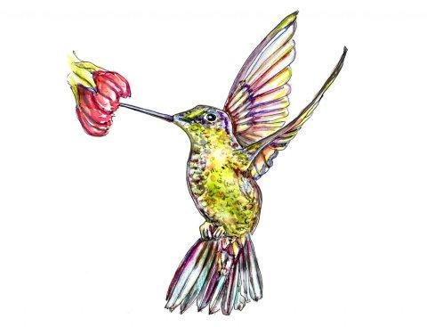 Hummingbird Wings Watercolor Illustration