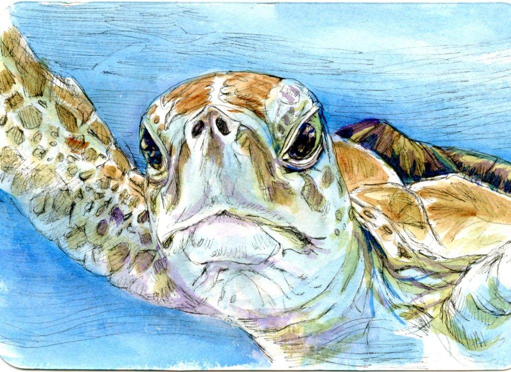 Sea Turtle-Prompt #Ocean Creatures. Zebra Zensations Technical Pen, QoR Watercolor using a Princeton