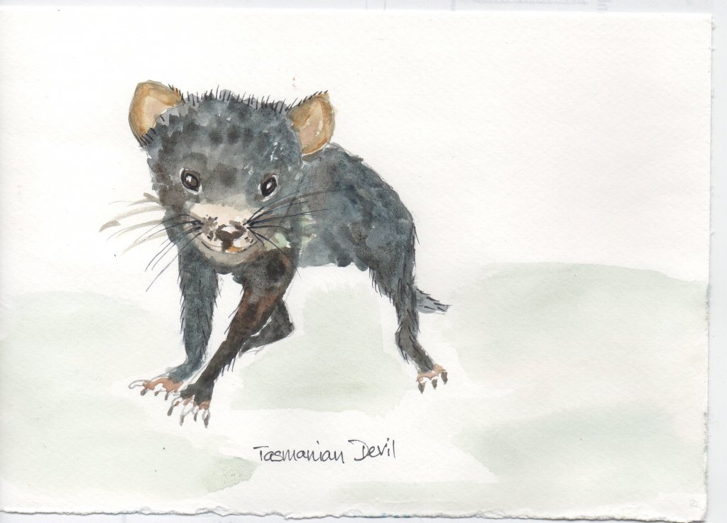 I don't own a furry thing, so I painted a Tasmanian Devil. They are an endangered species and