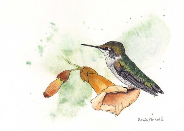 Hummingbird And Flower Watercolor by Robin Arnold