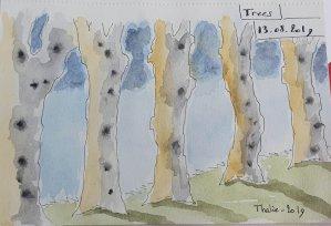 13 – Trees – Colonne d'arbres sur la route 13-Trees
