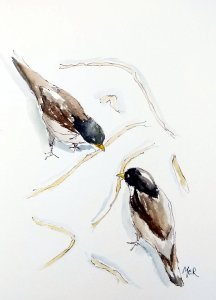 8/8/19 Birds A friend and I were sitting outside at a local coffee shop and were lucky to be able to