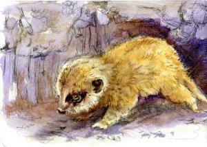 Baby Meerket-Zensation Technical Pen & QoR Watercolor on Hahnemühle ColdPress Watercolor Postca