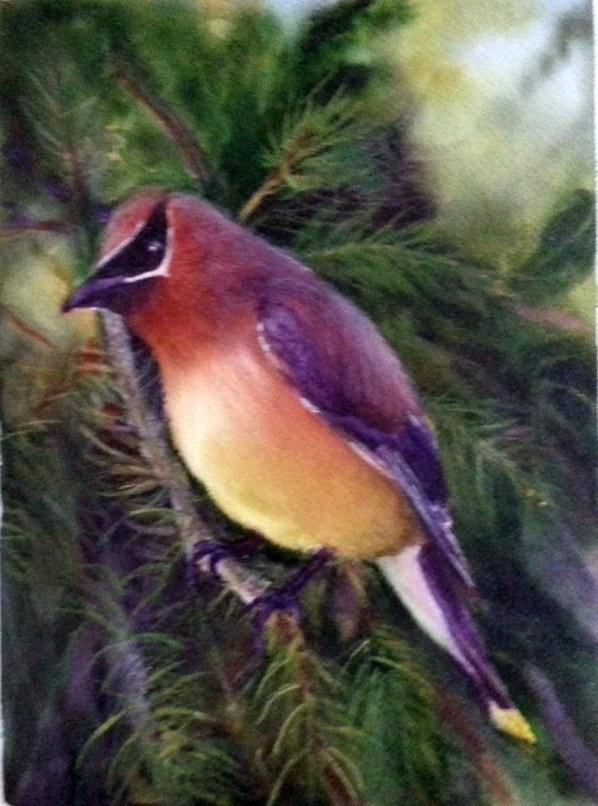 Bird Watercolor Painting Renee Marks