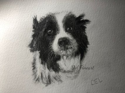 Blu Border Collie Pencil Drawing by Del Fineart