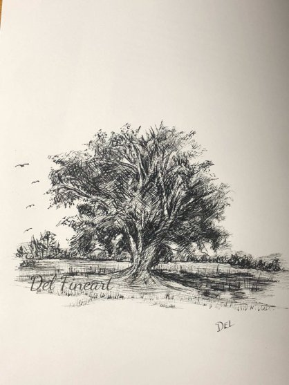 Cottonwood Tree Pencil and Ink by Del Fineart
