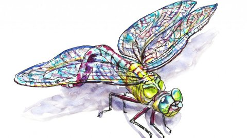 Dragonfly Watercolor Illustration