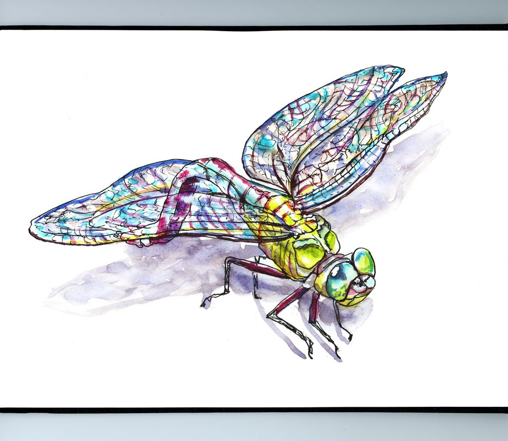 Dragonfly Watercolor Illustration Sketchbook Detail