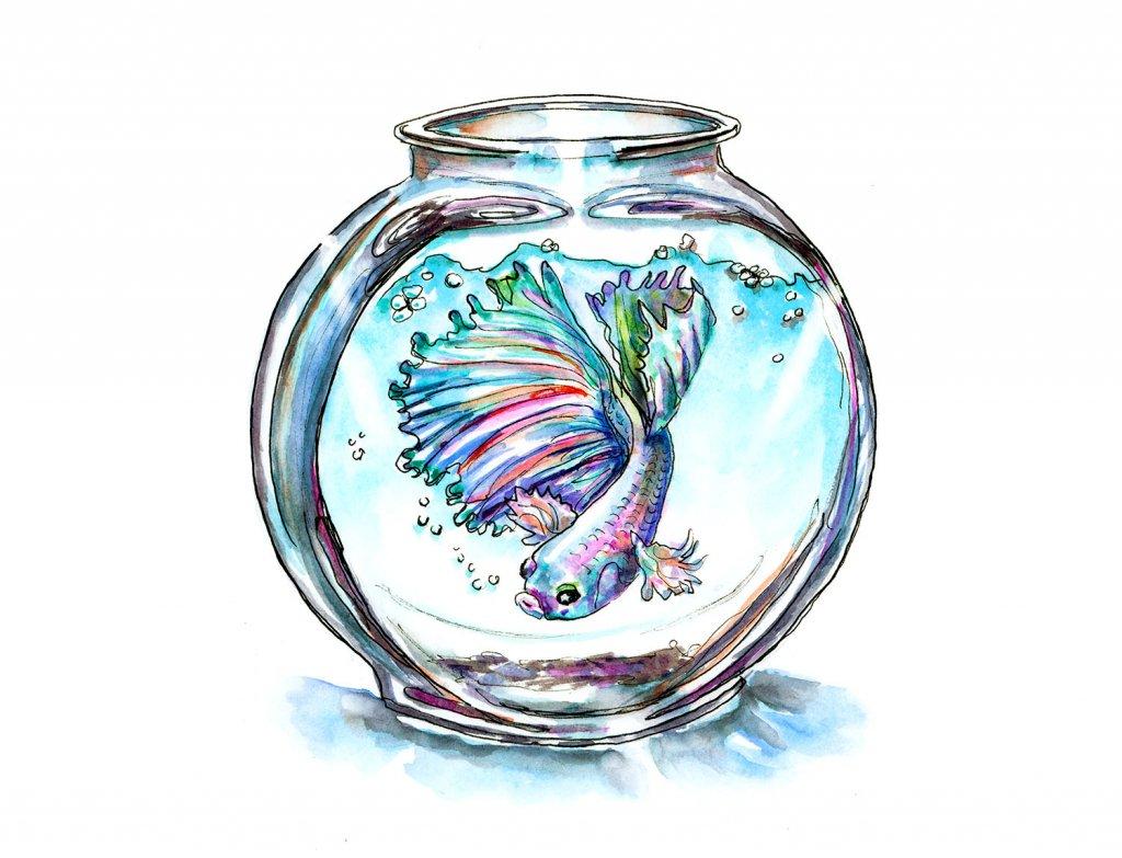 Betta Fish In Bowl Watercolor Illustration