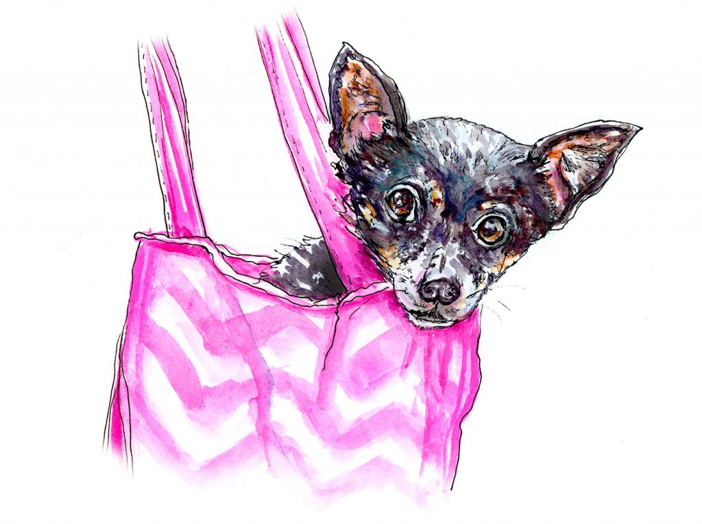 Chihuahua Bag Illustration