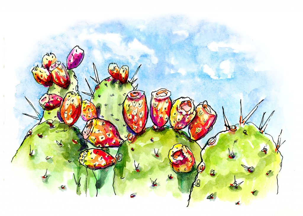 Cactus Blooms Watercolor Illustration