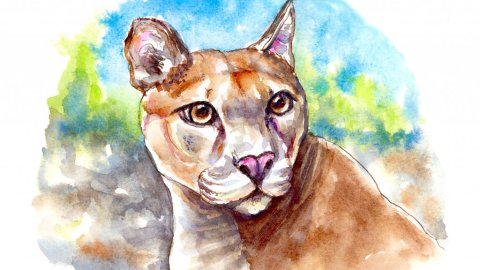 Mountain Lion Puma Watercolor Illustration