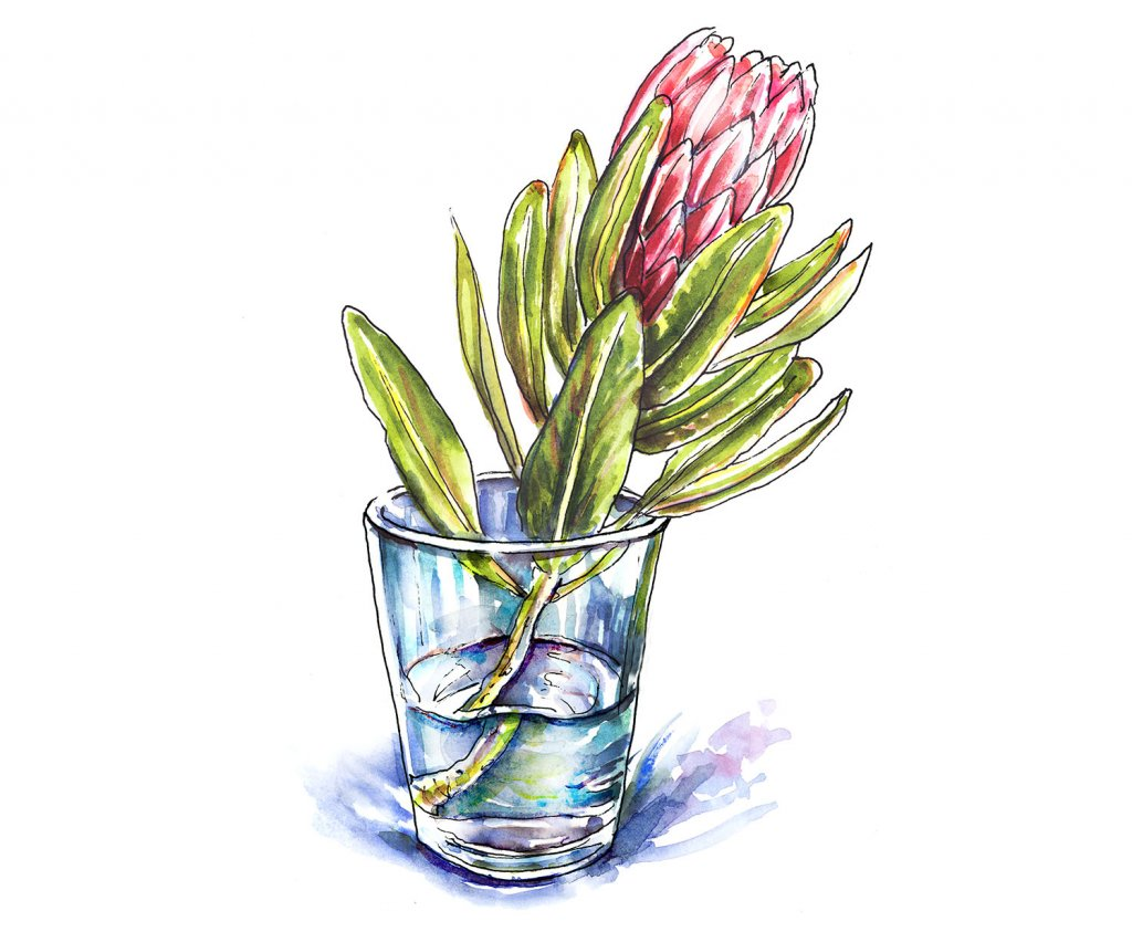 Protea Flower Watercolor Painting