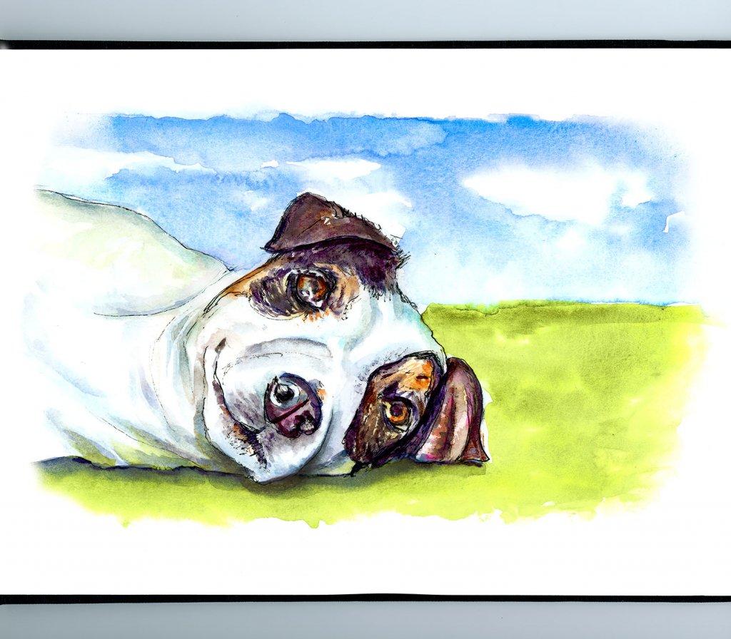 Jack Russell Terrier Watercolor Illustration Sketchbook Detail