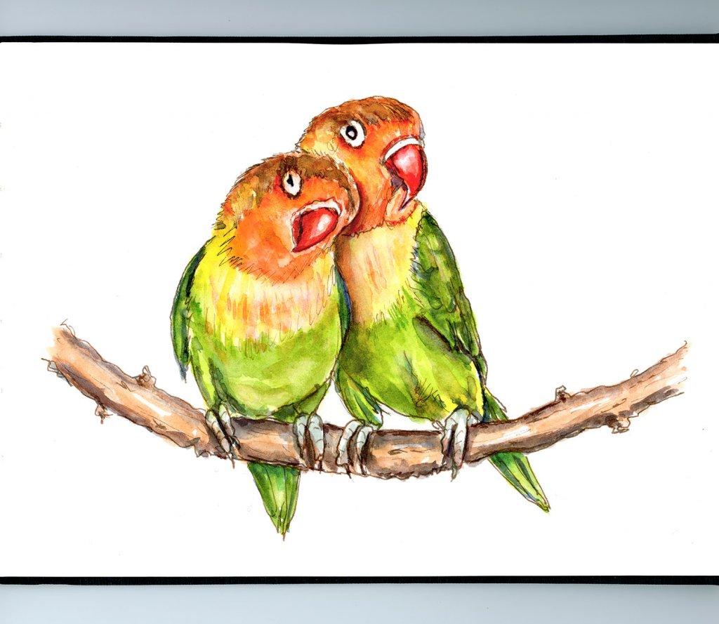 Lovebirds Watercolor Illustration Sketchbook Detail