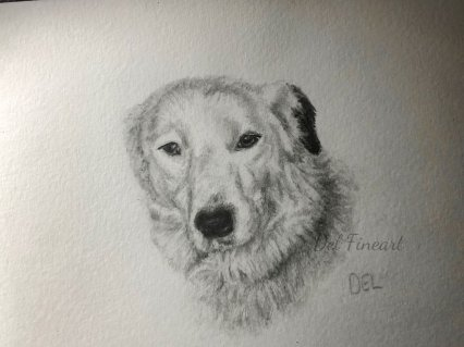 Flynne Border Collie Pencil Drawing by Del Fineart