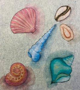 Whimsical seashells 6A7E3325-D65E-449D-9BFF-5ED1A6F2D9B7