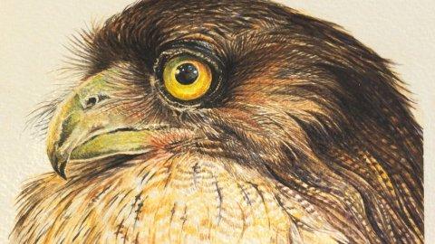 Brown Fish Owl Painting by Prasad Natarajan
