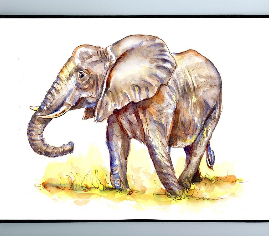 Elephant Watercolor Illustration Sketchbook Detail