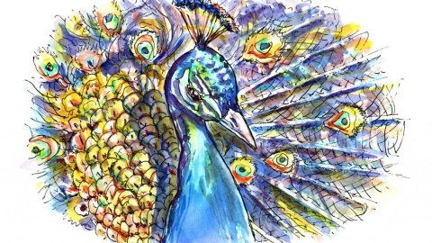 Peacock Feathers Watercolor Illustration
