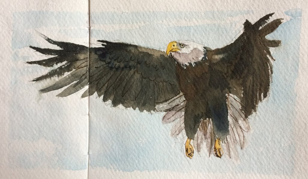 Working on another wee book of postcard size paintings- this time a Book of Raptors. IMG_4782IMG_478