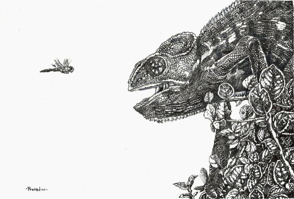Indian chameleon Pen and Ink Drawing by Prasad Natarajan