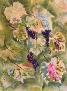 On my walks, I've seen the wild grapes clustered on fence posts, and growing over the bushes a