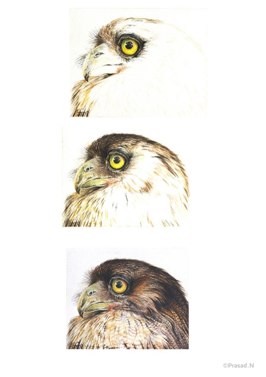 Tutorial Steps Owl Painting by Prasad Natarajan
