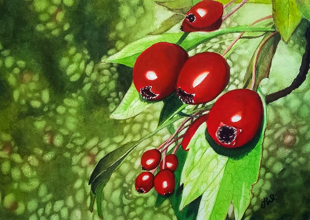 Berries Watercolor by Teresa Whyman Tesartmania