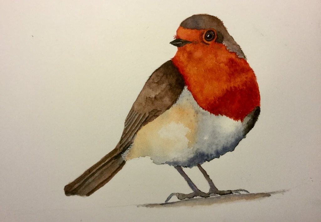 Bird Watercolour Painting English Robin