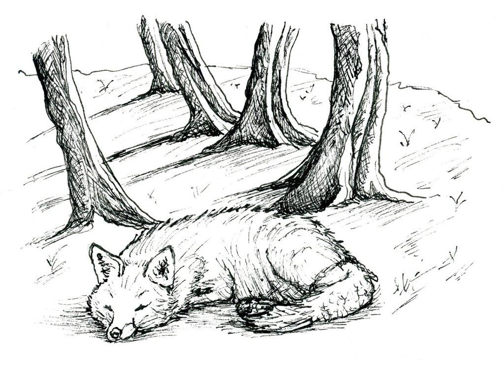 Day 11 - Fox Snow Scene Inktober Illustration