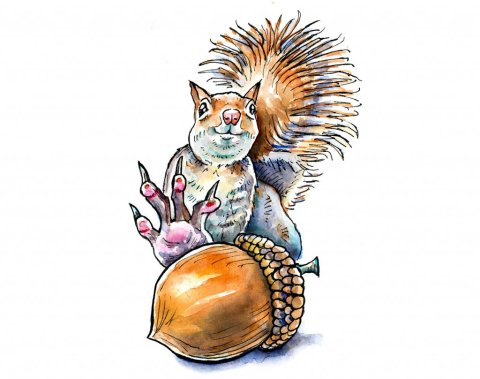 Squirrel Grabbing For Acorn Nut Watercolor Illustration