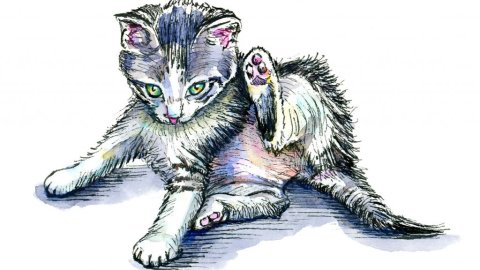 Kitten Laying After Chasing Tail Watercolor Illustration