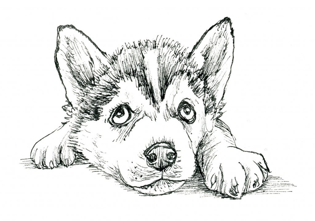 Siberian Husky Puppy Drawing Inktober 2019