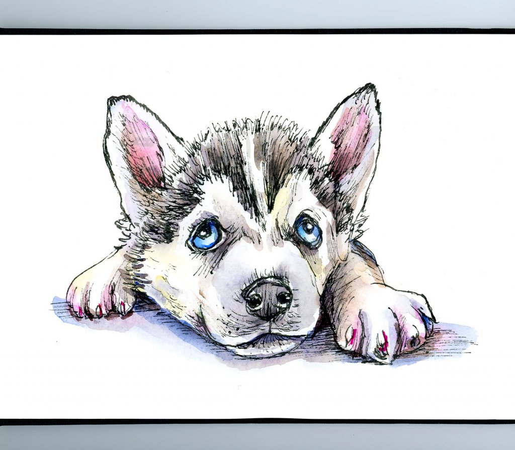 Siberian Husky Puppy Inktober Watercolor 2019 Sketchbook Detail