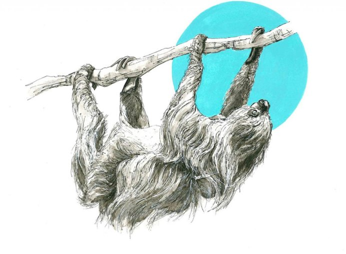 Sloth Drawing Ink Wash by Valerie de Rozarieux