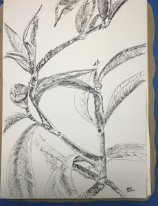 Day 15: doodle sketch outdoor tree 4E349ECC-A404-4582-B995-D7E9C8414704