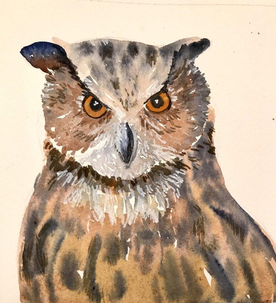 November owl 80ED8927-E8E0-4A25-A25B-F615285E508A