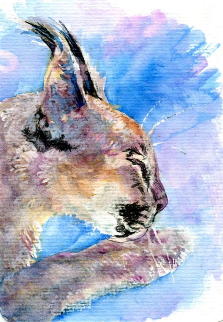 Caracal Cat – Zebra Zensations Technical pens and Daniel Smith Watercolor on Hahnemühle Rough