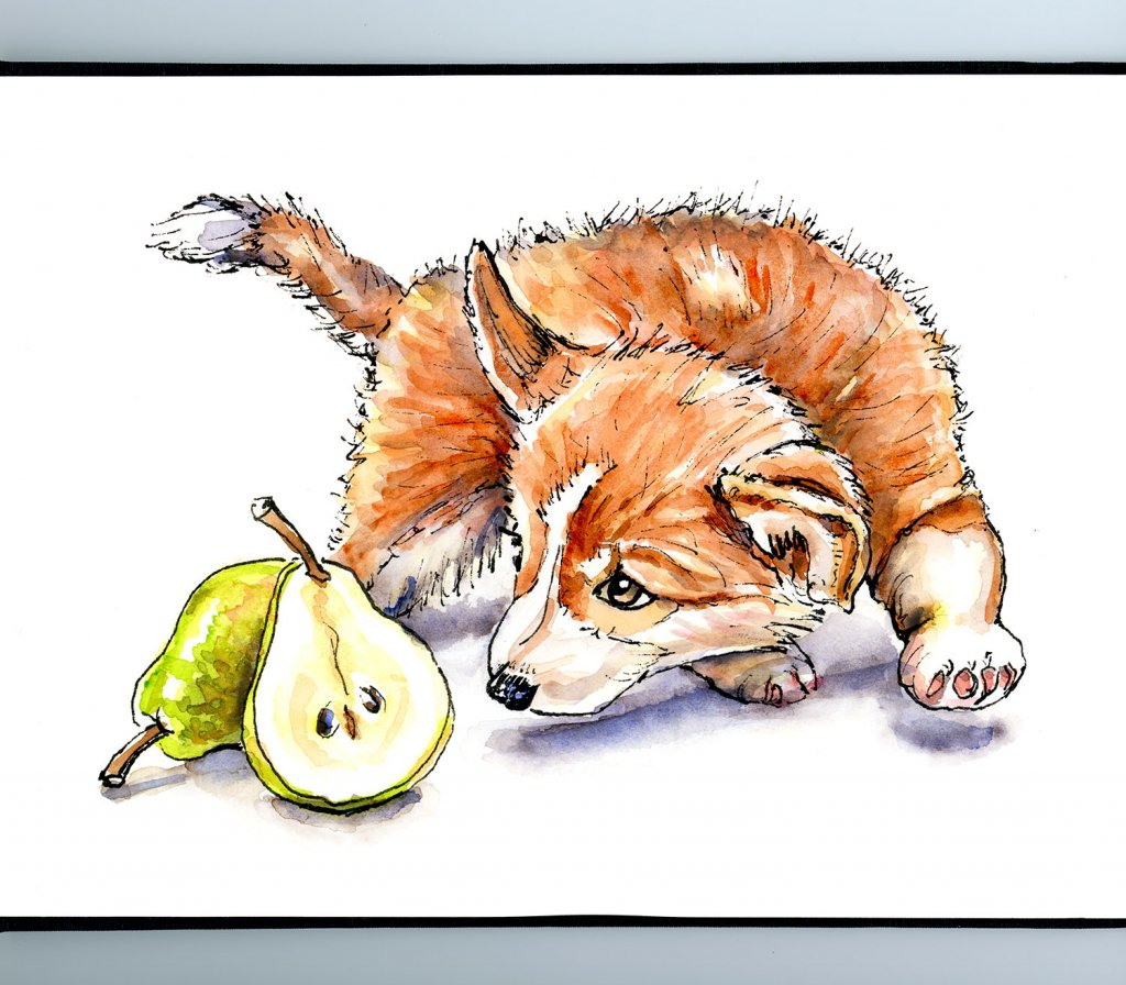 Corgi Puppy And Pear Watercolor Illustration Sketchbook Detail