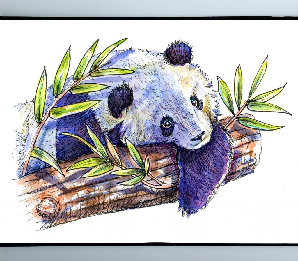 Panda In Tree Bamboo Watercolor Illustration Sketchbook Detail