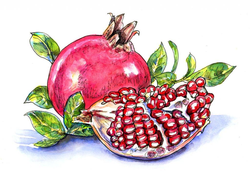 Pomegranate Watercolor Illustration