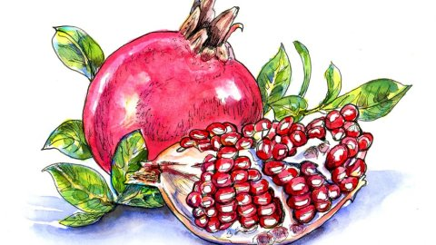 Pomegranate Watercolor Illustration