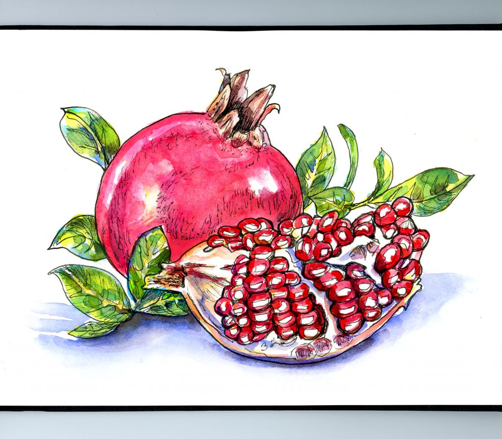 Pomegranate Watercolor Illustration Sketchbook Detail