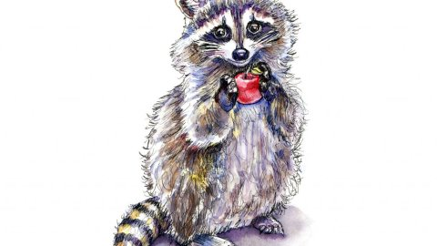 Raccoon Standing With Apple Watercolor Painting