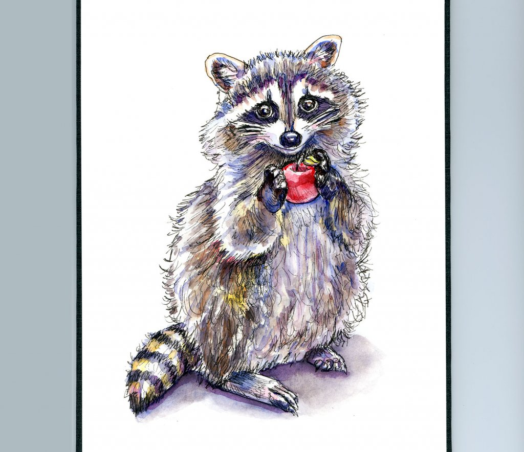 Raccoon Standing With Apple Watercolor Painting Sketchbook Detail