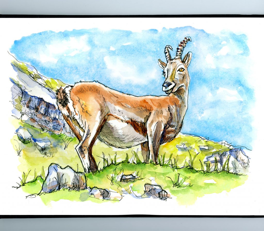Climb Every Mountain Goat Watercolor Illustration Sketchbook Detail