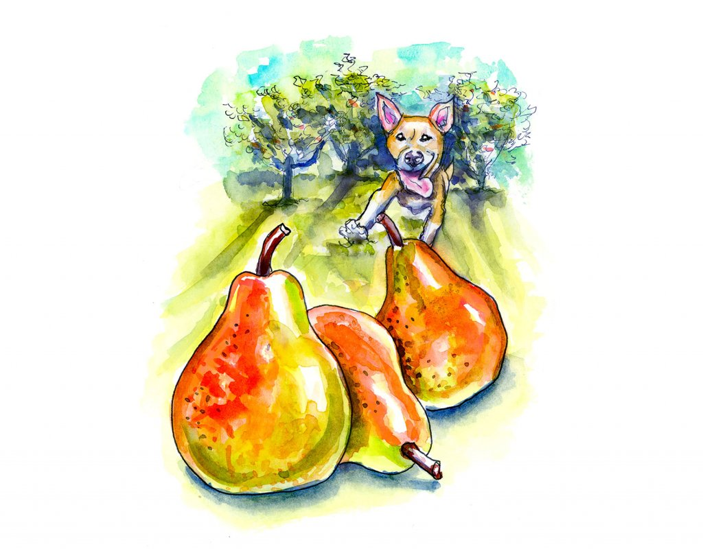 Pear Trees Dog Running Watercolor Illustration