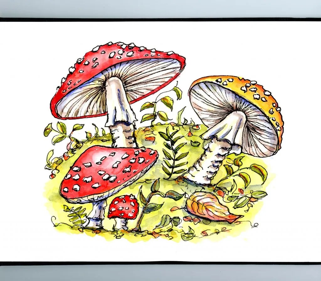Fly Agaric Mushrooms Watercolor Illustration Sketchbook Detail
